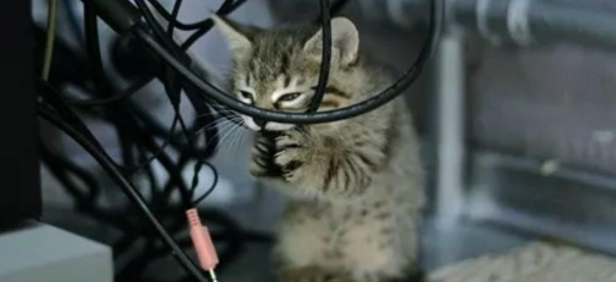 Не подключен WAN кабель в роутере и другие проблемы порта